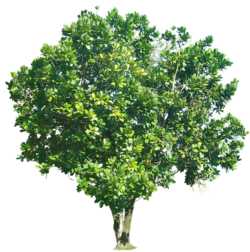 Displaying (19) Gallery Images For Transparent Tree...